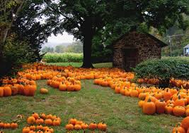 Soon, pumpkins will be passe! Photo from wikipedia.org